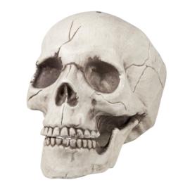 Skelet hoofd Jawbone