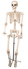 Skelet pro reality op standaard