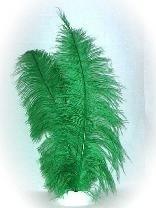 Veer spadonis groen 50cm