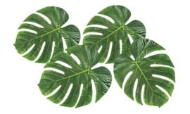 Palmbladeren set 4