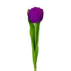 Huisvaasje - Namaaktulp paars |