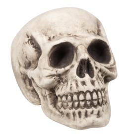 Skelet hoofd Bigbrain