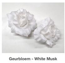 Witte Geurbloem Sea Breeze