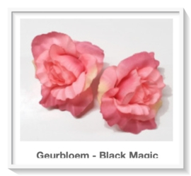 Geurbloem Black Magic