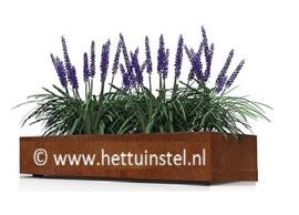 Cortenstaal plantenbak zonder bodem 200x50x40cm