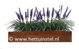 Cortenstaal plantenbak 100x75x30cm