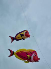 verschillende hot vissen