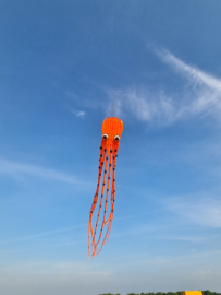 oranje 17 meter inktvis