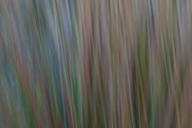 Bewegend pijpestrootje (HGR-005)