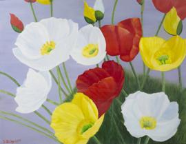 Kleur van de lente  (SUO-004)