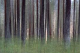 Dansende bomen  [HGR-003]