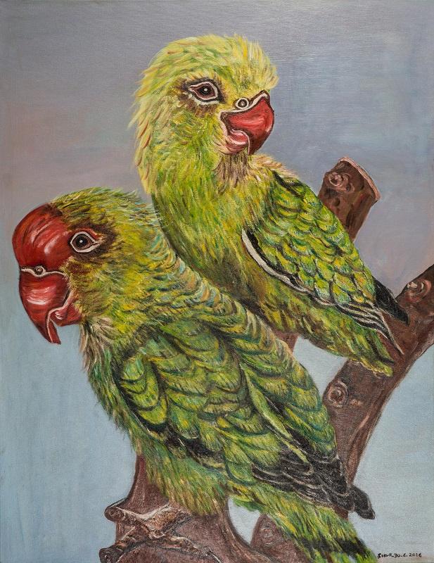 Papagaai Agaporniden (SO-019)