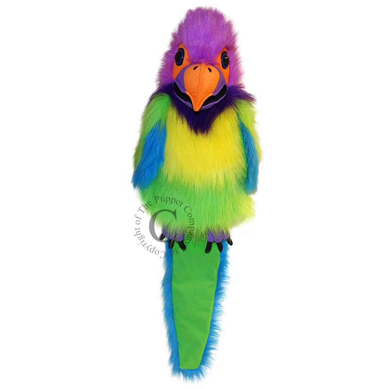 Plum-Headed Parakeet handpop