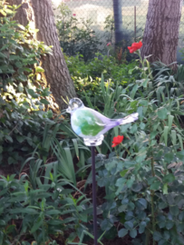 Bird Summer