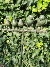Tuinsteker, 5 bronzen vogels op tak