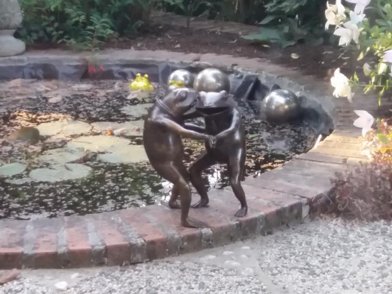 Dansende kikkers