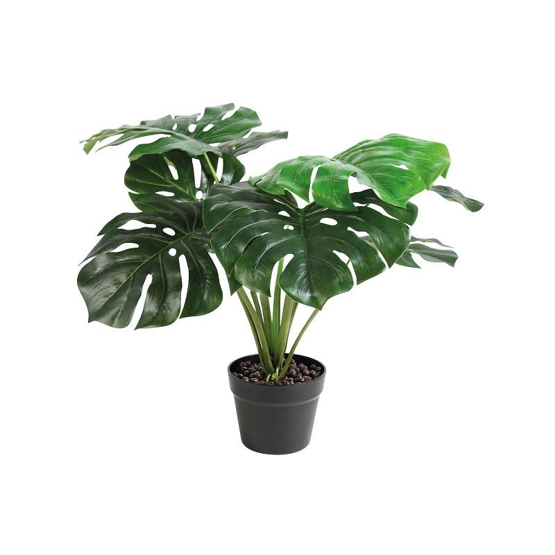 &k - Monstera plant