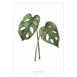 Poster A4- Monstera