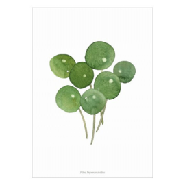 Poster A4- Pilea Peperomioides (pannekoekplant)