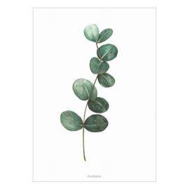 Poster A4- eucalyptus