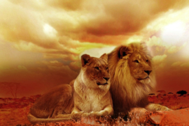 Leeuwen (50x70cm)