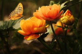 Bloemen (50x70cm)