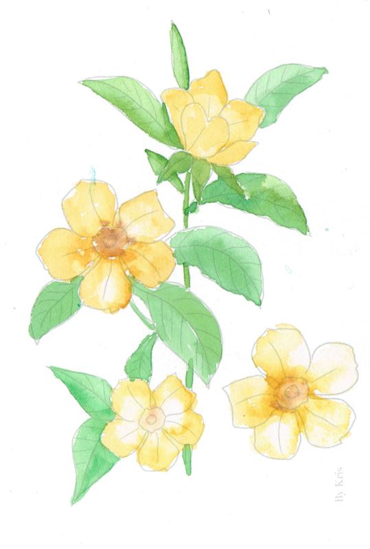 Watercolor it yourself 16. 'Bloemen'