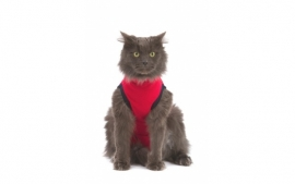 Medical Pet Shirt    Rood