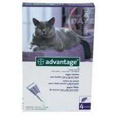 Advantage 80 Kat  4-8 kg (4 pip.)