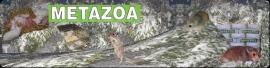 Metazoa knaagdierbrok Basis 25 kg    Alleen af te halen!
