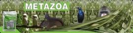 Metazoa Caviabrok 25 kg        Alleen af te halen!