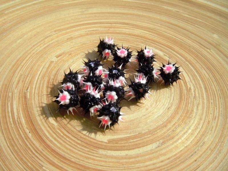 10 Jelly siliconen kralen