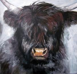Dekker, Schotse Hooglander 3105