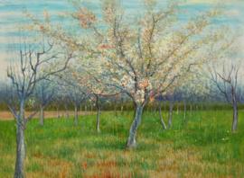 van Gogh reproductie, Bloeiende boomgaard met abrikozen