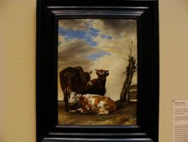 Twee koeien en een jonge stier