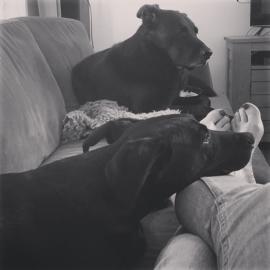 #doggies #chillen #free