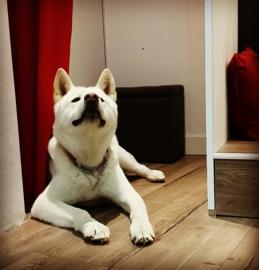 #doggie #love #Chimo
