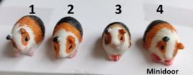 Cavia's (rood bont)