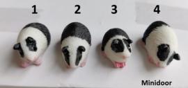 Cavia's (zwart/wit)