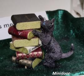 Poppy Cat wil op een stapel boeken klimmen!