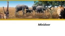 """Behangrand """"Safari"""""""
