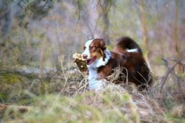 Inschrijfformulier cursus Jonge hond 2