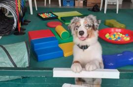 Inschrijfformulier cursus Jonge hond