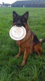 Boris met zijn frisbee