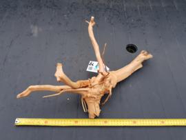 Spiderwood 37