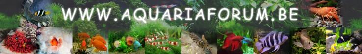 aquariaforum2.jpg