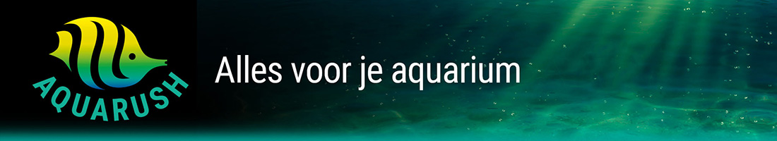 aquarush