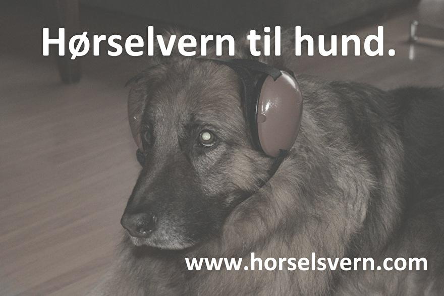 Hørselvern-til-hund.