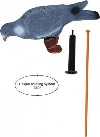 Geflockte wiebelduif Magnum waggle pigeon