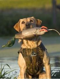 Dokken's neopreen camouflage hondenvest